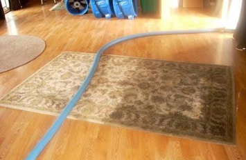 Merles Steam Clean - Half Clean Area Rug